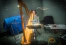 Alison Bjorkedal performs harp