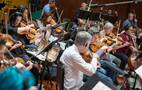 The viola section